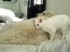 Bosco lepäilee kisun kanssa.
