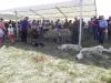 Rauhallisia ja asiallisia lammasvahteja