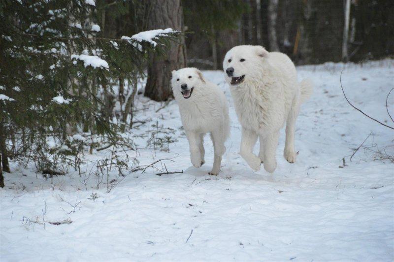 Orsara ja Dantte