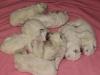 Kuusi tyttöä ja kaksi poikaa